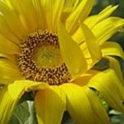 Windblown Sunflower One Poster