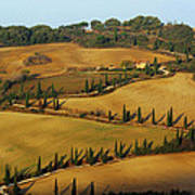Winding Road And Cypress Trees In Tuscany 1 Poster