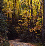Winding Road - Fall Color Poster