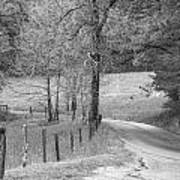 Winding Road In Wilderness Black And White Poster by Sherri Duncan