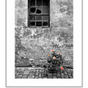 Window And Flowers Poster Poster
