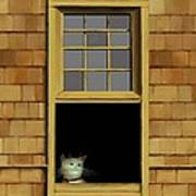 Window Cat    No.3 Poster