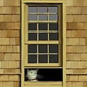 Window Cat    No.4 Poster