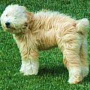 Windswept Dog Poster