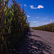 Windy Corn Poster