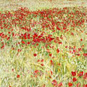 Windy Poppies At The Fields Poster