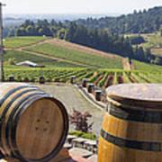 Wine Barrels In Vineyard Poster