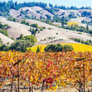 Wine Country Napa C.a. Poster