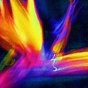 Wings Of Color Abstract  Poster