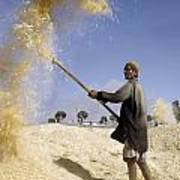Winnowing Wheat In Iran Poster