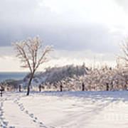 Winter At Scarborough Bluffs Poster