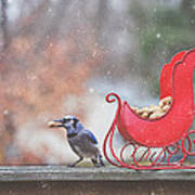 Winter Blue Jay #2 Poster
