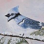 Winter Bluejay Poster