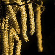 Winter Catkins Poster