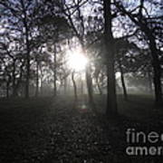 Winter Dawn Light Through Trees Poster