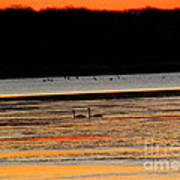 Winter Dawn Swans Poster