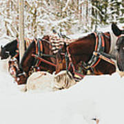Horses Eating In Snow Poster