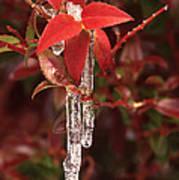 Winter Flower Poster