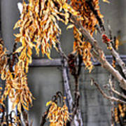 Winter Foliage Old House 13126 Poster
