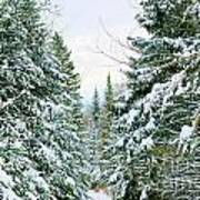 Winter Forest Landscape Poster