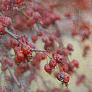 Winter Fruit Poster