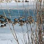 Winter Geese - 04 Poster