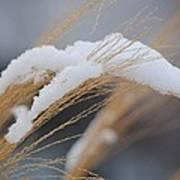 Winter Grasses IIi Poster