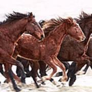 Winter Hardened Wild Horses Poster