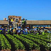 Winter Lettuce Harvest Poster