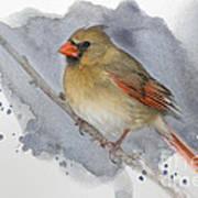 Winter Northern Cardinal Poster