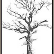 Winter Oak Art Poster
