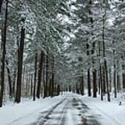 Winter On Mohegan Park Road Poster