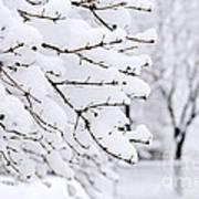 Winter Park Under Heavy Snow Poster by Elena Elisseeva