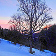Winter Poplar Tree Poster