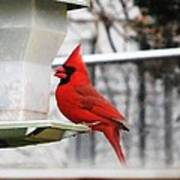 Winter Red Bird Poster