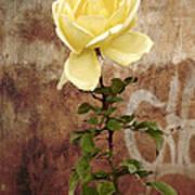 Winter Rose Poster