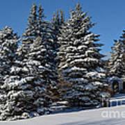 Winter Scenic Landscape Poster