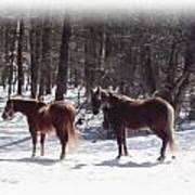 Winter Shadow Horses Poster