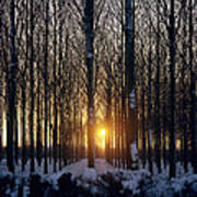 Winter Sunset Through The Trees Poster