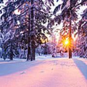 Winter Sunset Through Trees Poster by Priya Ghose