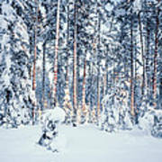 Winter Time In Forest Poster