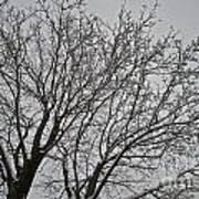 Winter Tree 6 Poster