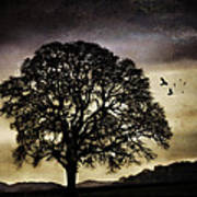 Winter Tree And Ravens Poster