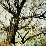 Winter Tree At The  Lake Shore  Poster by Ann Powell