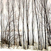 Winter Tree Fence 13283 Poster