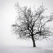 Winter Tree In Fog Poster by Elena Elisseeva