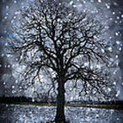 Winter Tree In Snowfall Poster