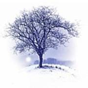 Winter Tree On Hill  Poster