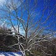 Winter Tree On Sky Poster