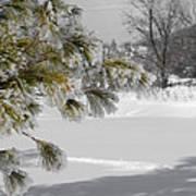 Winter Tree  Poster by Paulina Szajek